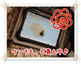 toilet-seikou2.jpg